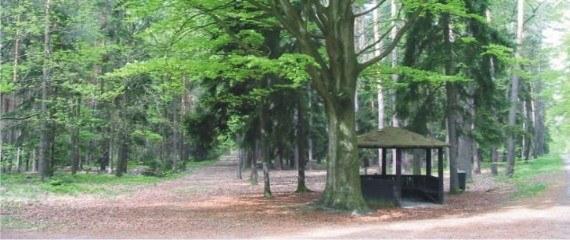 Toulky nekonečným lesem