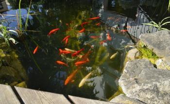 Zahradní restaurace Via Ironia - 4